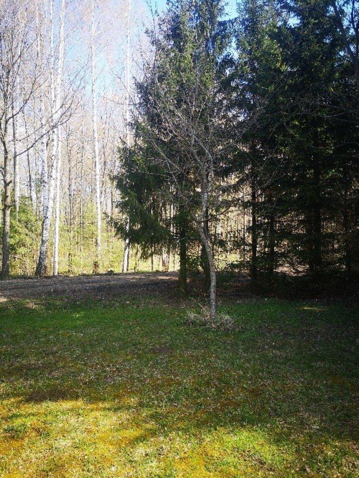 Ąžuoliukas su Šaravų ąžuolo klonu.<br>Valstybinių miškų urėdijos nuotr.