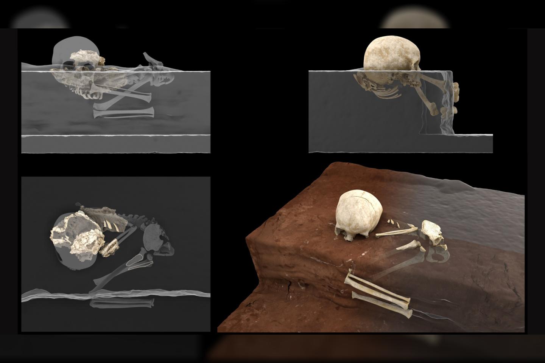 Po mėnesius trukusių sudėtingų tyrimų, kurių metu norint ištirti radinį rentgeno spinduliais ir sukurti išsamų 3D turinio modelį, buvo naudojama mikrokompiuterinė tomografija, buvo identifikuota mažo Homo sapiens vaiko kaukolė ir kaulai.<br>J. González/E. Santos iliustr.