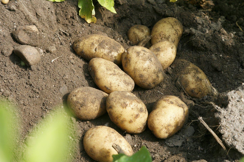 Biržiečiai negali patekti į ūkininkų turgų, nors karantinas jau atlaisvintas.<br>T.Bauro nuotr.
