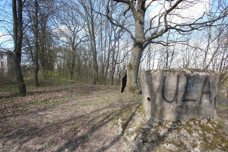 Aleksoto kalno šlaitus, kurie yra bešeimininkė miško paskirties žemė, savivaldybė nori perimti ir žada juos sutvarkyti.<br>M.Patašiaus nuotr.