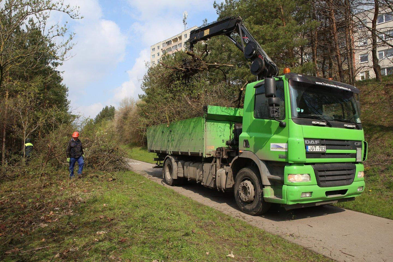 Žalieji plotai tarp Rasytės gatvės ir Baltų prospekto savivaldybei nepriklauso, tačiau gyventojams pasiskundus nulūžusius medžius teko tvarkyti jos darbininkams.<br>M.Patašiaus nuotr.
