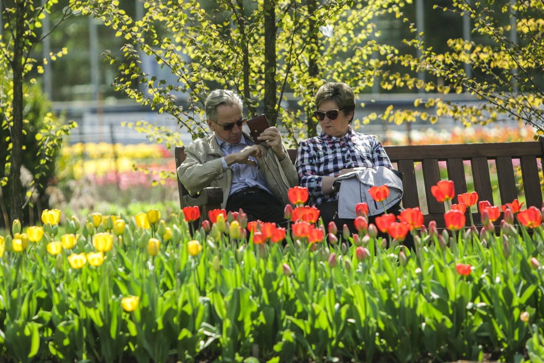 Tulpės, žiedai, žydėjimas, Kauno Botanikos sodas, VDU<br>G.Bitvinsko nuotr.