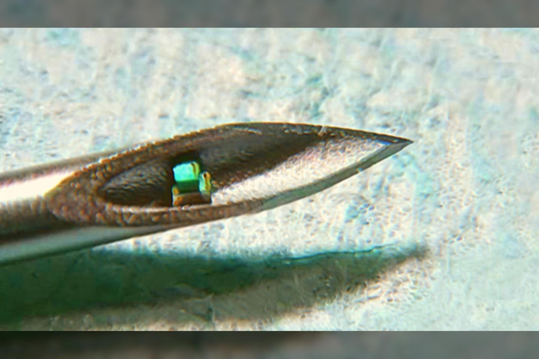 Kolumbijos universiteto mokslininkai sukūrė neįtikėtinai mažą mikroschemą, kurią į odą galima implantuoti adata.<br>Chen Shi / Columbia Engineering nuotr.