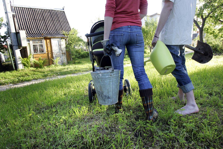 Sodas, daržas, šeima, vyras, žmona, vaikas, vežimėlis, laisvalaikis<br>V.Balkūno nuotr.