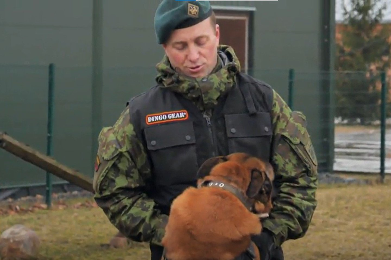 Šunys, padedantys kariams tarnybos metu, itin vertinami.<br>Stop kadras