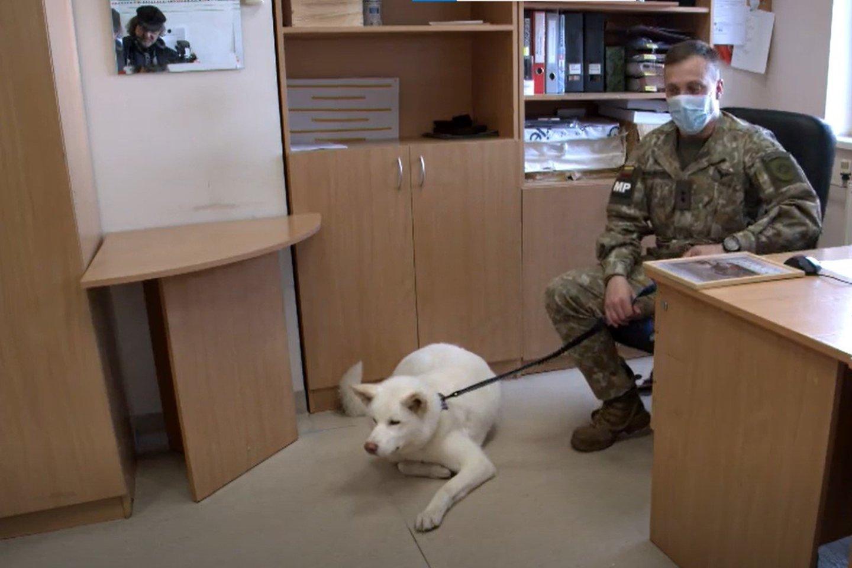 Šuns dienos išvakarėse nuspręsta oficialiai leisti atsivesti šunis.<br>Stop kadras