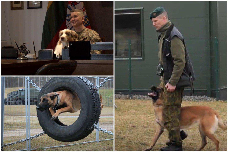 Lietuvos kariuomenės vadas papasakojo apie keturkojus karius: atskleidė, kokią šunybę jam iškrėtė augintinis.<br>Lrytas.lt koliažas