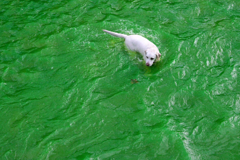 Į upę išleidžiamas termofikacinis vanduo, kuris nėra pavojingas žmonėms<br>Scanpix nuotr.
