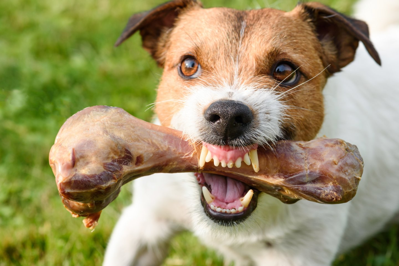 Kuo maitinti šunį: žalia mėsa ar sausu maistu?<br>123rf.com nuotr.