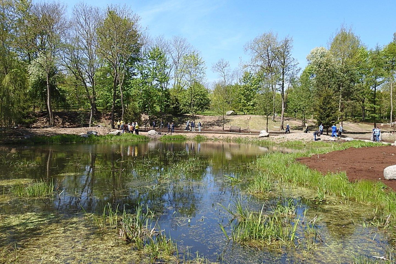 Iš Kuršių marių dugno iškelti rieduliai papuošė prie Dangės upės kuriamą Klaipėdos universiteto (KU) Botanikos sodą, japoniškoje dalyje jau pasodinti pirmieji augalai.<br>G.Pilaičio nuotr.
