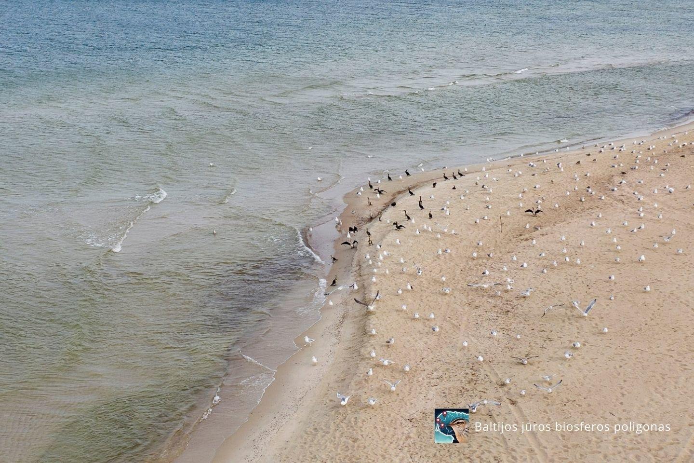 Baltijos jūros biosferos poligonas.