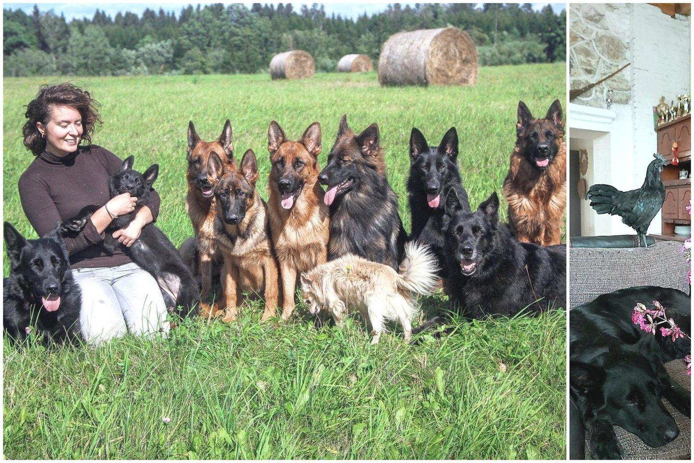 Pareigūnės namuose – 10 šunų, 3 katės, triušis ir gaidys, kuris paleidžia gerklę vos suskamba telefonas.<br>Asmeninio archyvo nuotr.