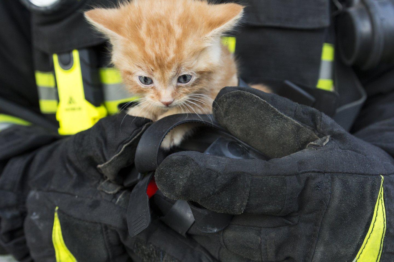 Ugniagesiai Klaipėdoje gelbėjo į mirtinus spąstus papuolusius 4 kačiukus.<br>123rf.com nuotr.