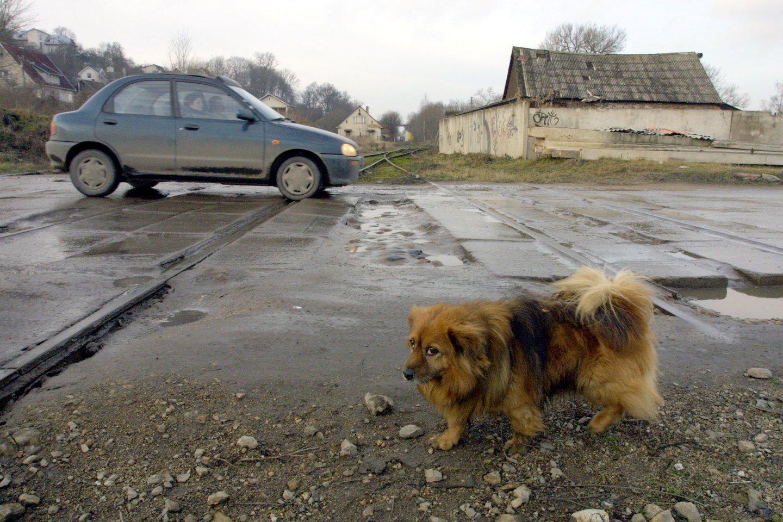 Seimui raginant greičiau asfaltuoti žvyrkelius, premjerė Ingrida Šimonytė sako, kad dėl to gali nukentėti kiti ekonomikos sektoriai.<br>M.Patašiaus nuotr.