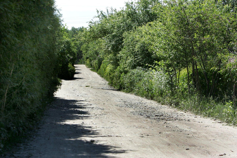 Seimui raginant greičiau asfaltuoti žvyrkelius, premjerė Ingrida Šimonytė sako, kad dėl to gali nukentėti kiti ekonomikos sektoriai.<br>V.Balkūno nuotr.