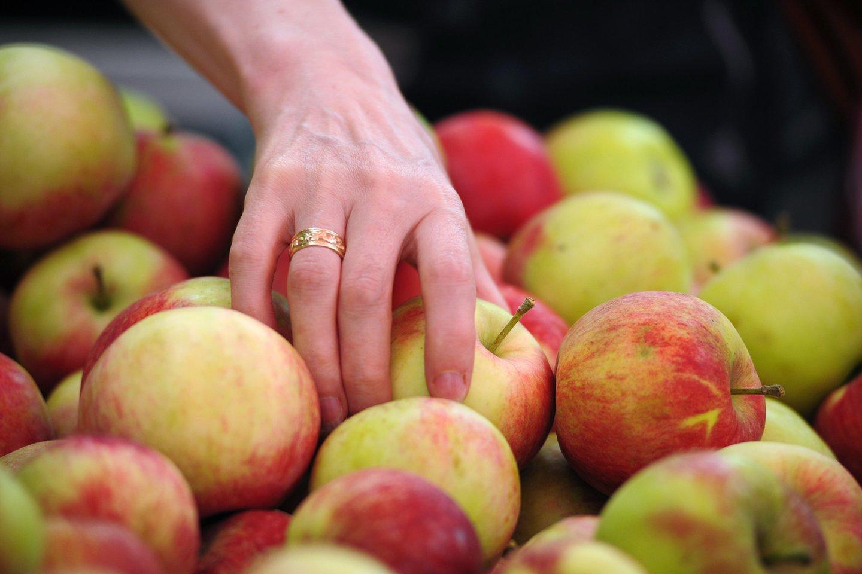 Obuoliai stiprina imuninę sistemą.<br>123rf nuotr.