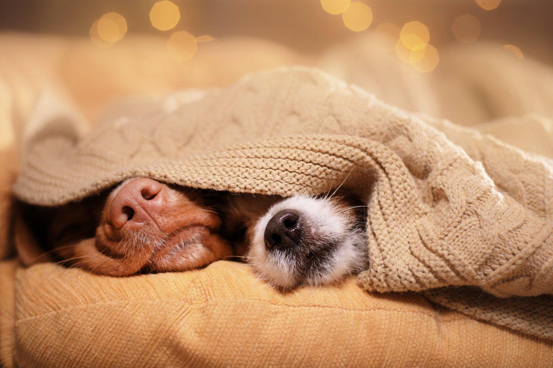 Tyrėjų manymu, šunys unikaliai linkę sudaryti ryšius, netgi su kitos rūšies atstovais.<br>123rf nuotr.