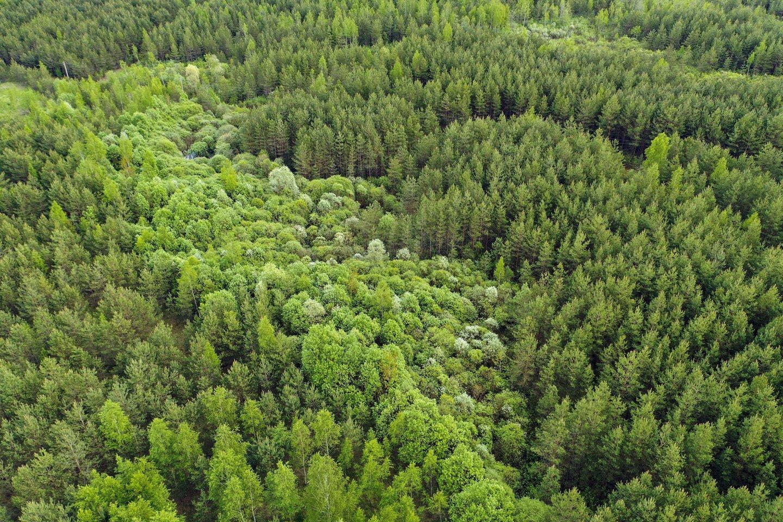 Įmonė užsiima ir miškų sodinimu.<br>V.Ščiavinsko nuotr.