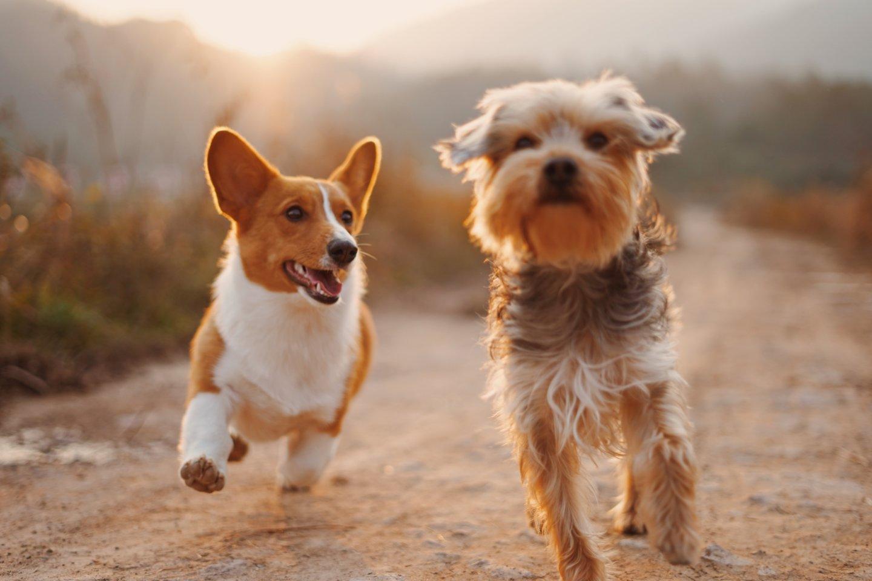 Gyvūnų kailio retėjimas gali pranešti apie ligą: kaip išvengti alopecijos?<br>unsplash.com nuotr.
