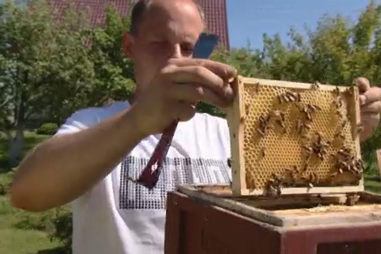 Bitės šiuo metu smarkiai darbuojasi.<br>Laidos stop kadras.
