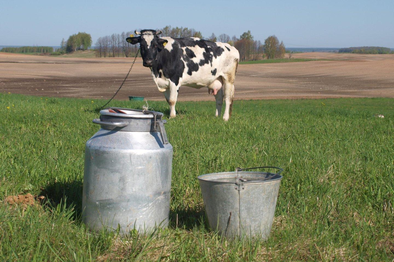 Pieno kainos seniai akylai stebimos. Norima, kad jos būtų regimos ir kitose maisto grandinėse.<br>A.Srėbalienės nuotr.