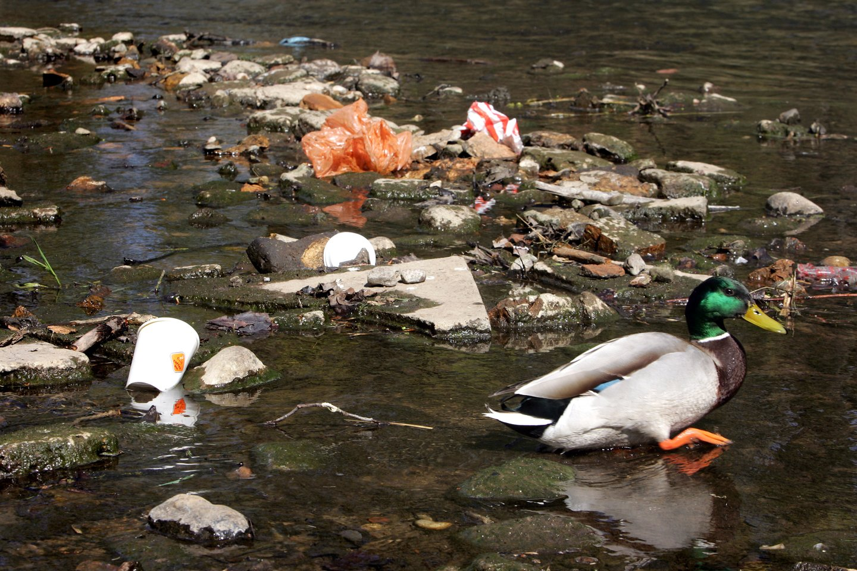 Lietuva prisideda prie pasaulinės pakrančių švarinimo iniciatyvos, tvarkys 80 vietų.<br>V.Balkūno nuotr.