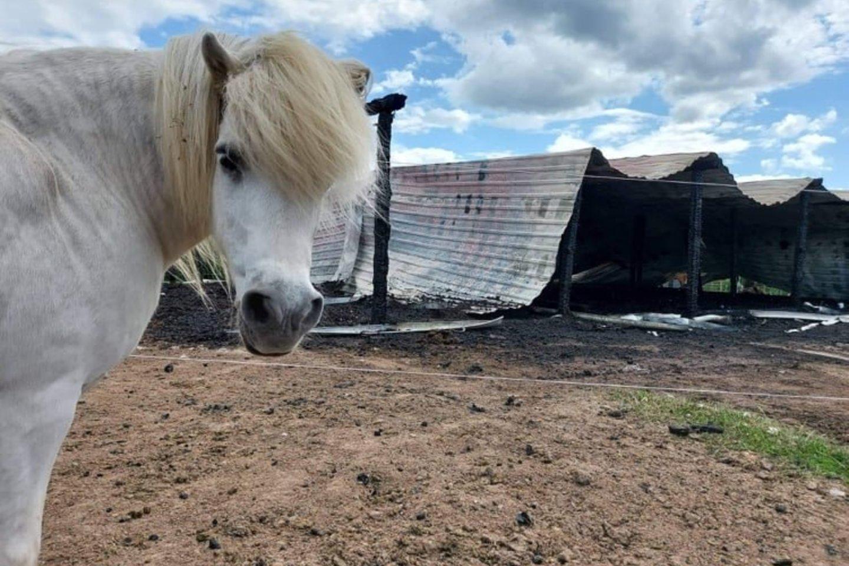 Arklių slėnį praėjusią savaitę ištiko didelė nelaimė.<br>Žirgų globos asociacijos nuotr.