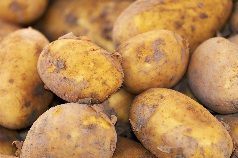 Įsibėgėjant vasarai kai kuriose Lietuvos vietose jau galima pastebėti kasant bulves – šios šviežios lietuviškos daržovės pasiekė ir prekybos tinklų lentynas.