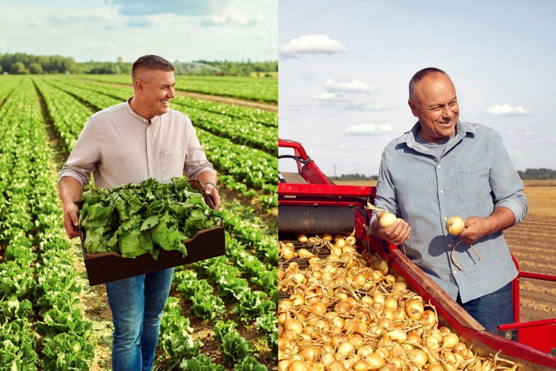 """Vaido ir Irmos Nagreckių salotų ir Vincento Lataičio svogūnų ūkiams į tarptautines daržovių auginimo praktikas lygiuotis padeda kasmet atnaujinamas GlobalG.A.P. (angl. """"Good Agricultural Practice"""") gerosios žemdirbystės praktikos standartas."""