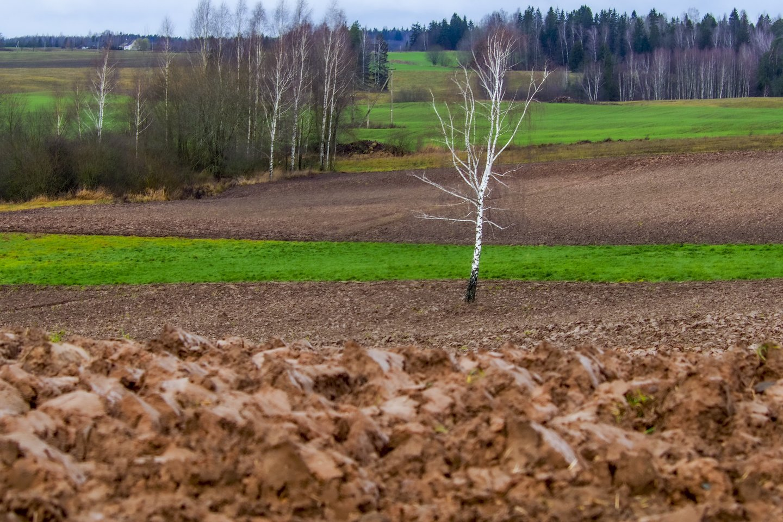 Prakiuręs dangus griauna derliaus prognozes bei gadina Lietuvos ūkininkų nuotaikas.<br>V.Ščiavinsko nuotr.