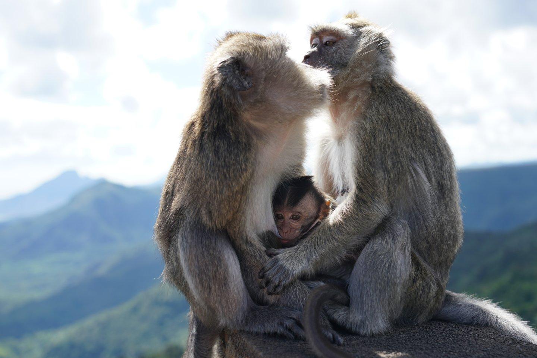 Gyvūnų emocijas sunku vertinti, tačiau Z. Clay teigimu, turimi įrodymai rodo, kad apkabinimai greičiausiai suteikia užtikrinimo primatams, kaip ir žmonėms.<br>123rf nuotr.