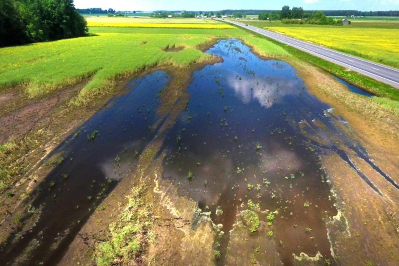 Laukuose prie Paįstrio po gausių liūčių aiškiai žūsta pasėliai ir to priežastis – supuvę melioracijos įrenginiai.<br>A.Švelnos nuotr.