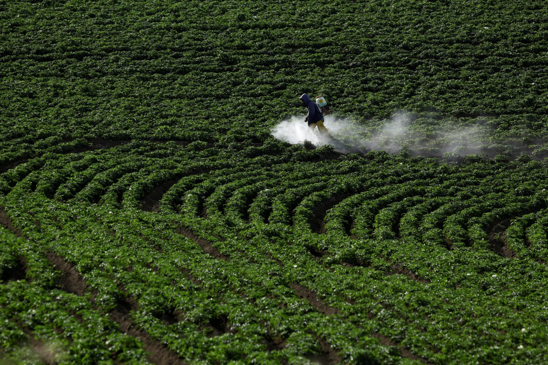Pesticidai.<br>Scanpix/Reuters/IP3press/AFP nuotr.