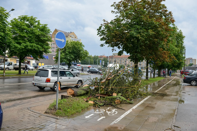 Ugniagesiai gelbėtojai sekmadienį maždaug 20 kartų visoje Lietuvoje vyko šalinti dėl vėjo gūsių nuvirtusių medžių.<br>J.Stacevičiaus asociatyvi nuotr.