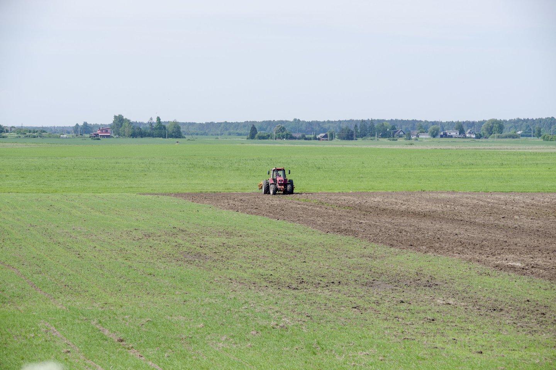 ŽŪM ir jos valdymo sričiai priskirtų organizacijų darbuotojai deklaravo pasėlius, kurių plotas sudaro 98,6 tūkst. hektarų.<br>V.Ščiavinsko nuotr.