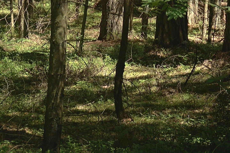 Turgavietėse jau prekiaujama pirmosiomis miško gėrybėmis.<br>Laidos stop kadras.