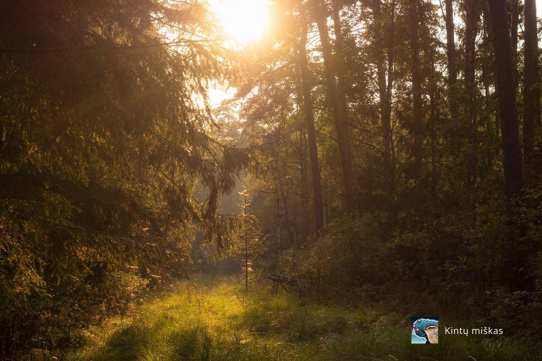 Kintų miškas