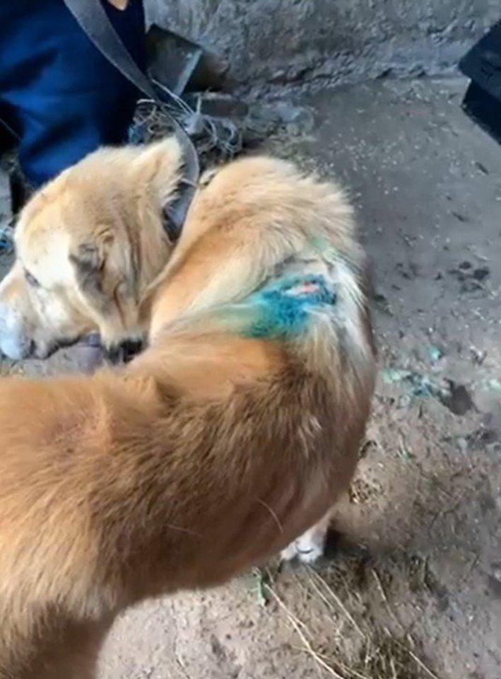 Pirmos instancijos teismas pripažino, kad veisėjas A. U. netinkamai elgėsi su gyvūnais ir skyrė jam baudą.<br>Stop kadras