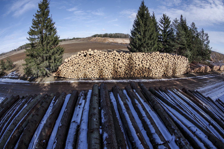 Sertifikatas užtikrina medienos kaip žaliavos atsekamumą iki galutinio gaminių iš jos pardavimo taško.<br>V.Ščiavinsko nuotr.