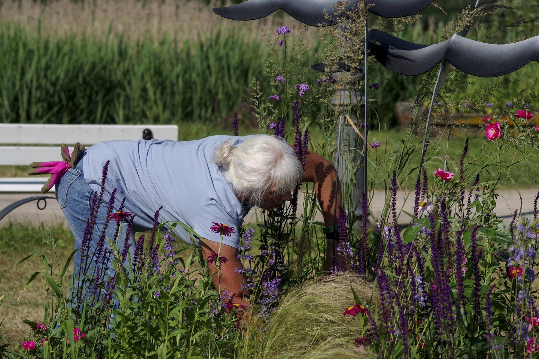 """Pakruojo dvaras vis labiau žydi, vyko gėlių kompozicijų-kilimų konkursas """"Žiedų valdovai 2021"""".<br>V.Ščiavinsko nuotr."""