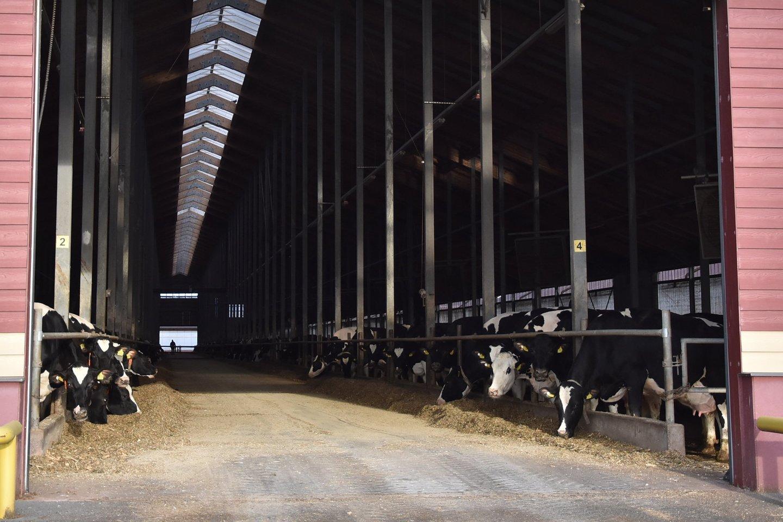 Be jokių ES nurodymų politikai sumanė stambiems ūkiams nurėžti tiesiogines išmokas.<br>A.Srėbalienės nuotr.
