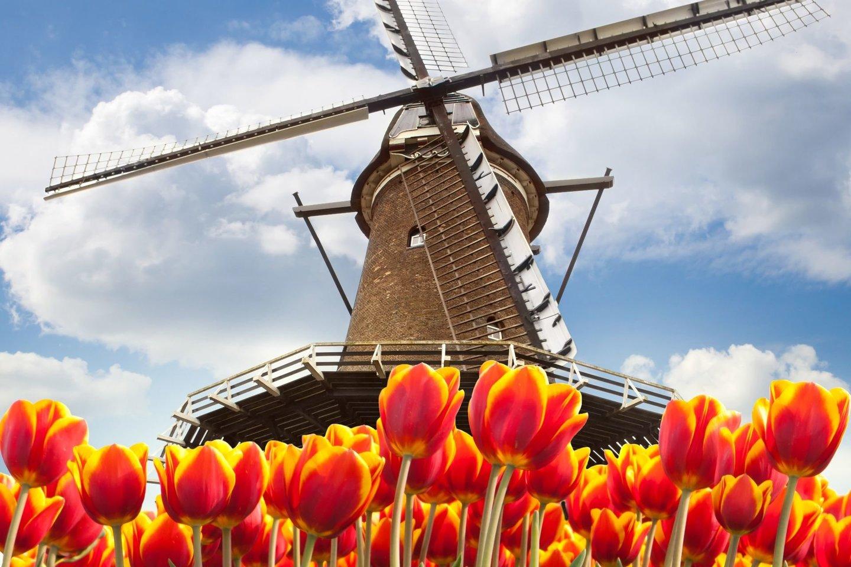 malūnai Europoje dygo visur, kur buvo pakankamai vėjuota, – Prancūzijoje, Olandijoje, Anglijoje, Vokietijoje, Lenkijoje, Baltijos ir Skandinavijos šalyse, šiaurės Rusijoje.<br>123rf nuotr.