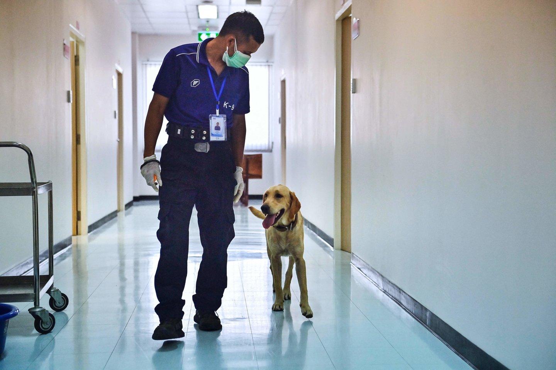 Į greitosios pagalbos automobilį, kuriame buvo šeimininkė, neįlestas šuo, bėgo šalia iki pat ligoninės.<br>AFP/Scanpix nuotr.