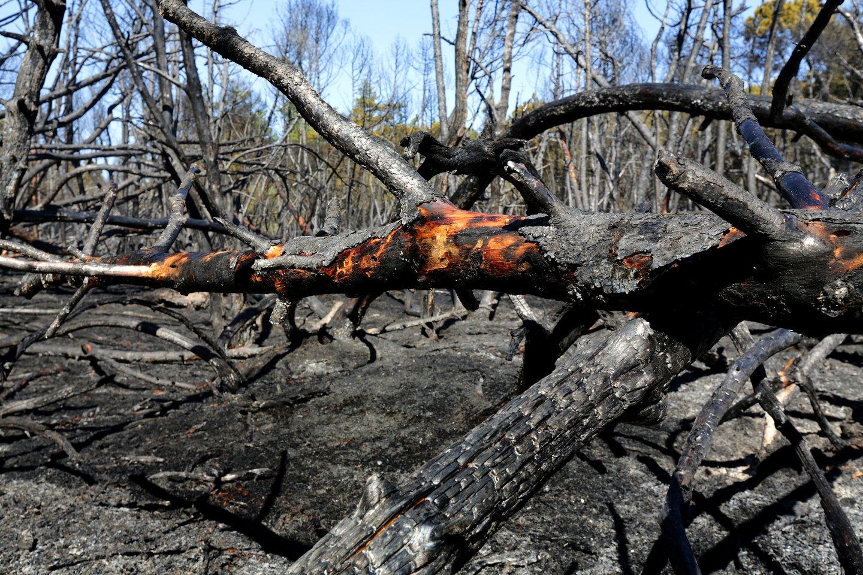 Miškininkai įspėja dėl didelio miškų gaisringumo ir ragina žmones Jonines švęsti atsargiai. Valstybinių miškų urėdijos teigimu, šalyje įsivyravo IV–os klasės gaisringumas.<br>V.Balkūno nuotr.