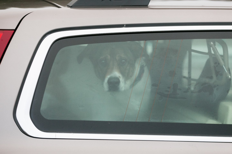Šuo automobilyje.<br>T.Bauro asociatyvi nuotr.