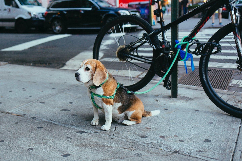 Gyvūnas ir dviratis – populiaru, bet ar saugu?<br>unsplash.com nuotr.