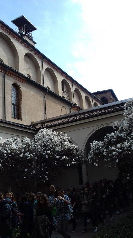 Milanas.<br>T.Kačerausko nuotr.