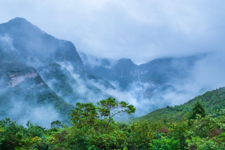 Didelis medis Amazonėje į atmosferą gali išskirti 1000 litrų vandens, vos per vieną dieną.<br>123rf nuotr.