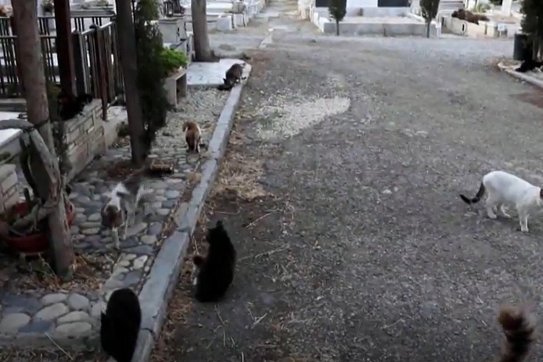 Vyras rūpinasi šimtais niekam nereikalingų gyvūnų, kurių namais tapo kapinės.<br>Stop kadras