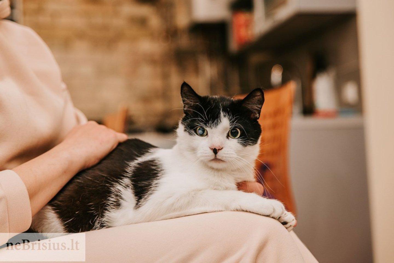 """""""Gavau daug įspėjimų, kad tai ne ta katė, kuri pasitiks prie durų, glaustysis ar bus rankinukė, bet tai nieko nekeitė, nes katė pasirinko mane, o aš turėjau ryžto ją prisimeilinti"""", – sako Aurelija, priglaudusi Moką ir Zuikį.<br>G.Kniežaitės Novikovienės nuotr."""